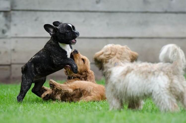 Três pets brincando na grama